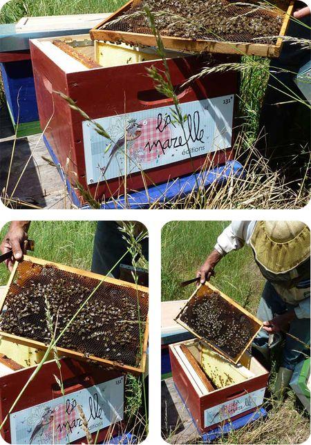Installation-ruche